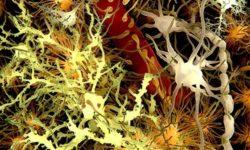 «Болезнь в пробирке» или что не так с гематоэнцефалическим барьером