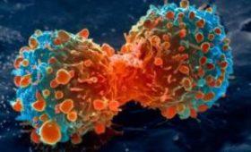 Биологи раскрыли тайну неуправляемого деления раковых клеток