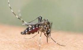 Аллергия на комаров: симптомы и лечение кулицидоза