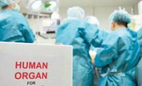 Делать трансплантацию можно только на словах, — в столице рассказали о больницах районных уровней