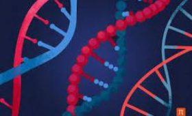 Ученые выяснили, что пятая часть генов человеку не нужна