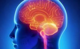 Пять мифов о работе головного мозга, в которые мы все еще верим  Источник: ladyhealth.com.ua