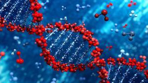 Самоодомашнивание людей объяснили изменением работы одного гена